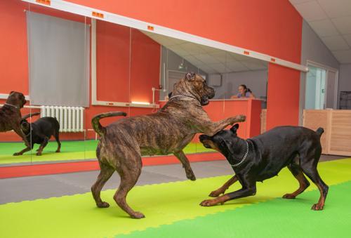 В Хендлинг Зале достаточно места для игр крупных собак.