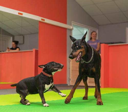 Социализация щенков и взрослых собак.