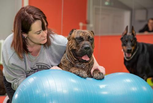 Тренажеры для фитнеса и реабилитации собак разных пород.