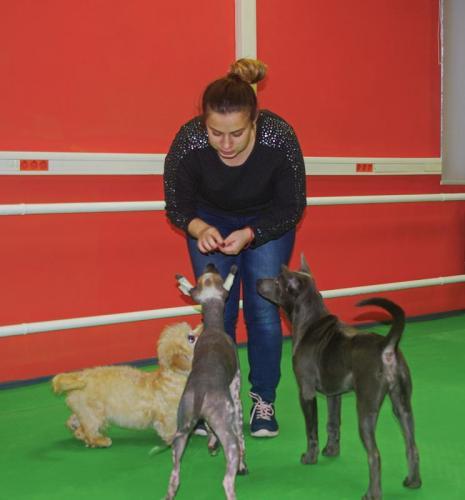 Важно поддерживать интерес собаки к занятиям.