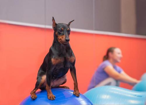 Дог-Фитнес. Развитие баланса и укрепление мышц спины.